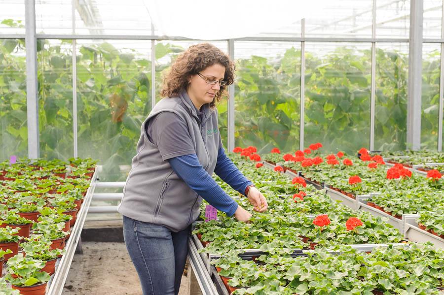 Produktion Blumen